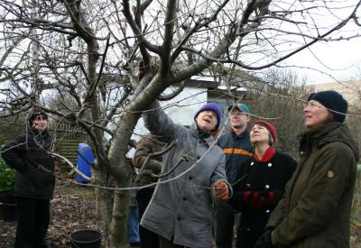 Hier ist viel auszulichten, meint Sabine Ulmer, die Fachberaterin für den Obstbaumschnitt (Mitte)